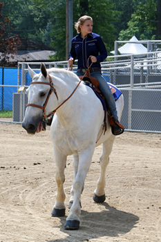 The Cuhahoga County Fair Horse Show