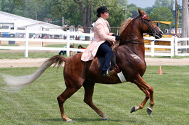 The Cuyahoga County Fair Horse Show