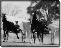 Harness Racing at the Fair