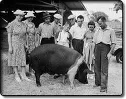 Prize Pig at the Cuyahoga County Fair
