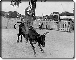 Rodeo Rider at the Cuyahoga County Fair