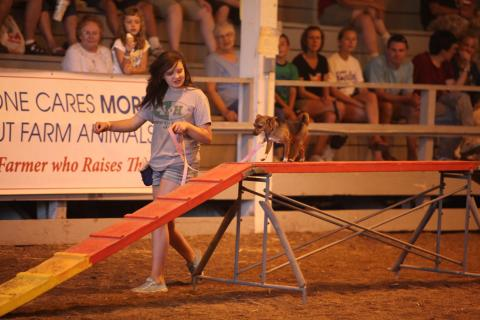 4-H Dog Agility Demonstration