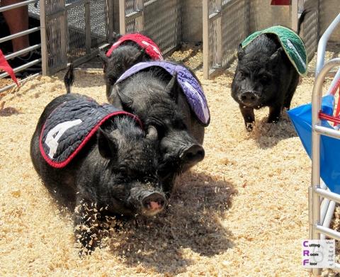 Swifty Swine Pig Races